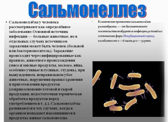Лечение и профилактика сальмонеллезной инфекции