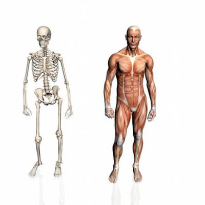 Заболевания костно-мышечной системы
