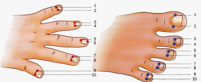 Акупунктурные прибором своими руками 46