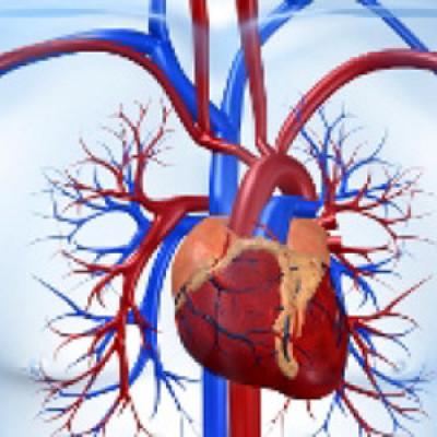 Факторы риска развития Атеросклероза и ИБС