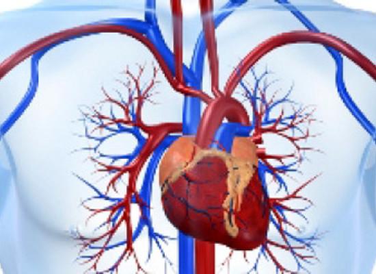 Система органов кровообращения