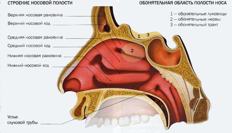 Исправление носа иркутск