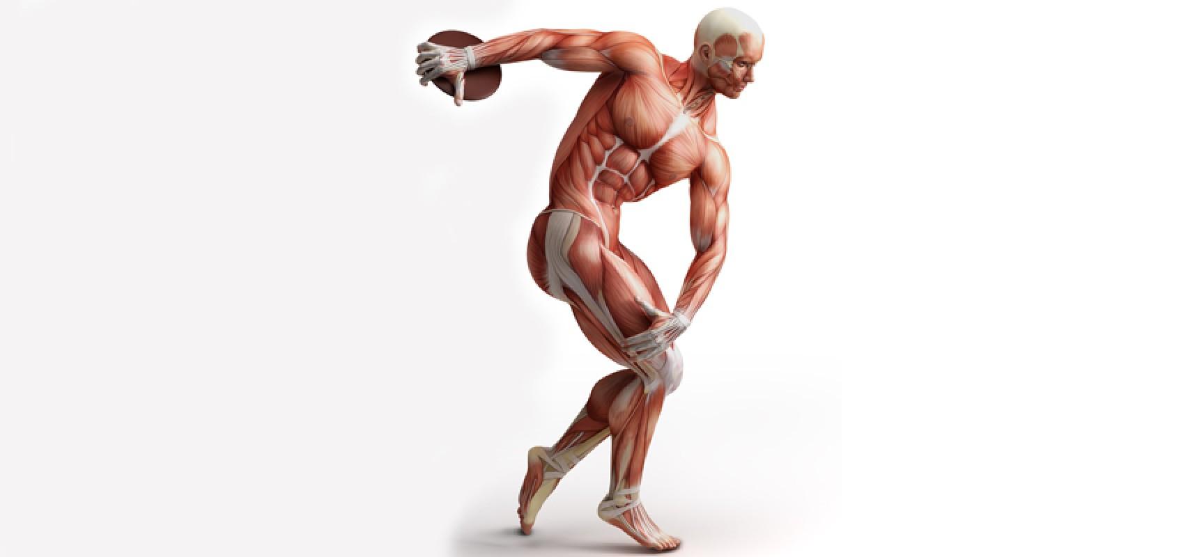 Физическая активность — путь к здоровью