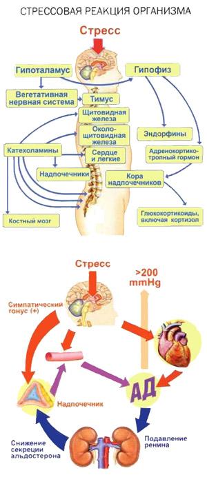 Механизмы возникновения стресса, Meddoc
