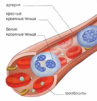 Медицина при анемии