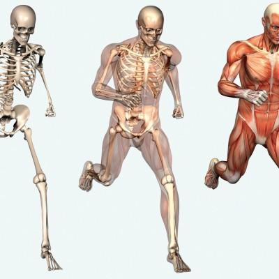 Движения через взаимосвязь скелета и мышц