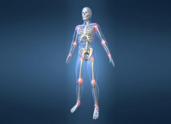 Строение и функции суставов