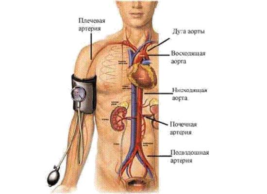 Малокровие (ишемия)