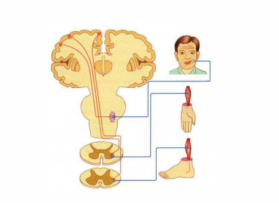 Заболевания нейронов передних и задних рогов спинного мозга