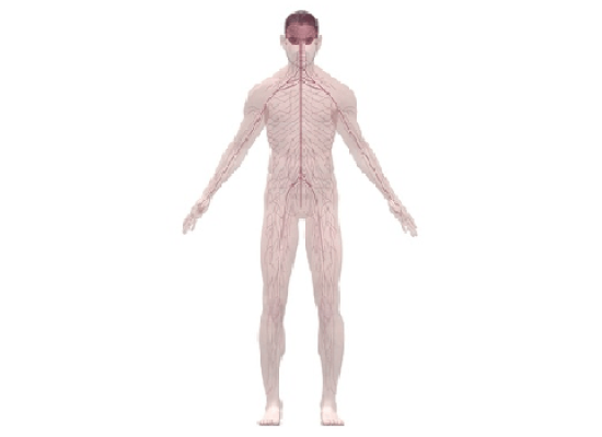 Характеристика заболеваний центральной и периферической нервной системы