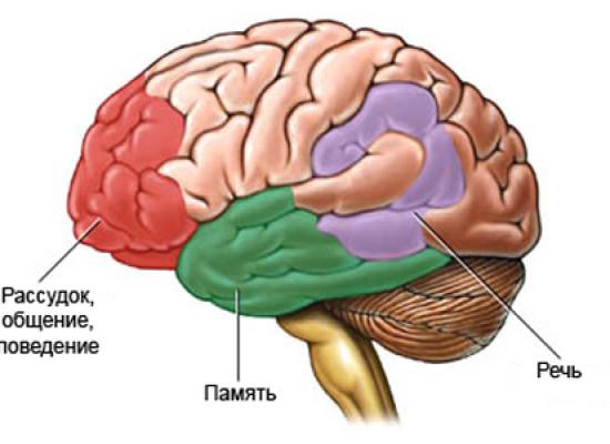 Старение нервной системы