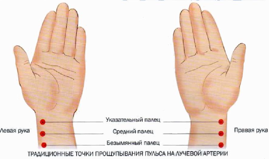 Точки прощупывания пульса на лучевой артерии