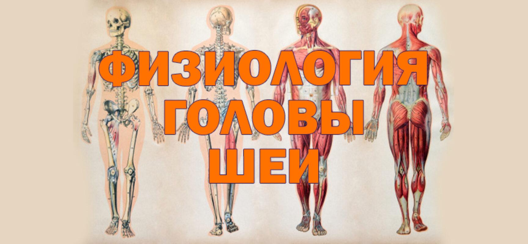 Физиология костно-мышечной системы головы и шеи